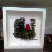 Вечно живые,  цветы,  растения,  картины из экзотических растений